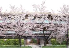 疫情并未影响日本高价房产的稳定畅销