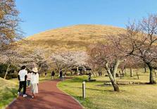 在日本结婚后,两人的生活费用需要多少钱?