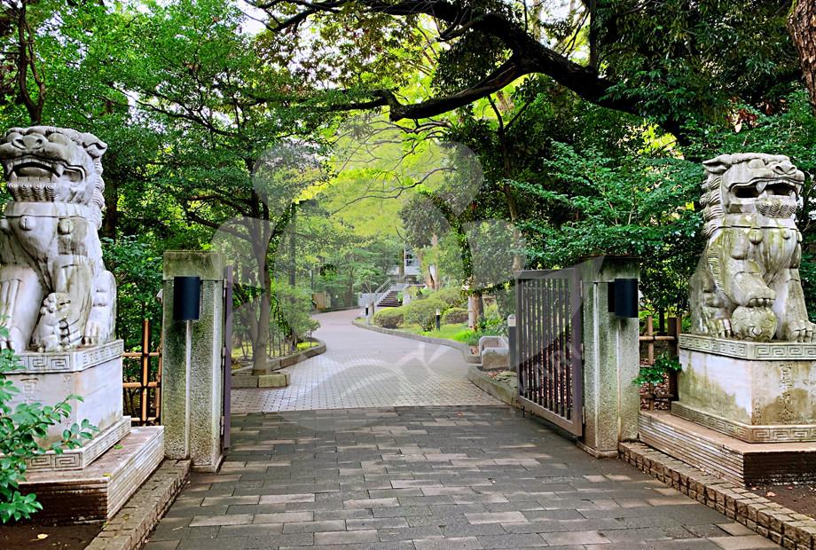 日本大学.png